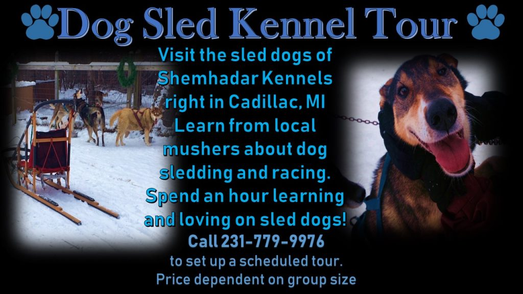 This image has an empty alt attribute; its file name is Sled-Dog-Kennel-Tour-1024x576.jpg