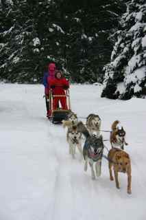 2010 Shemhadar Sled Dog Adventures 3s