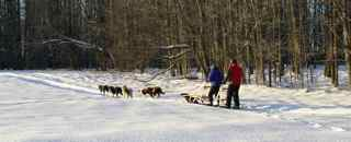 2010 Shemhadar Sled Dog Adventures 5