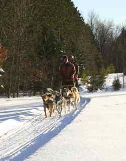 2010 Shemhadar Sled Dog Adventures 7s