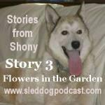 "Story 3 – Stories from Shony – ""Flowers in the Garden!"""